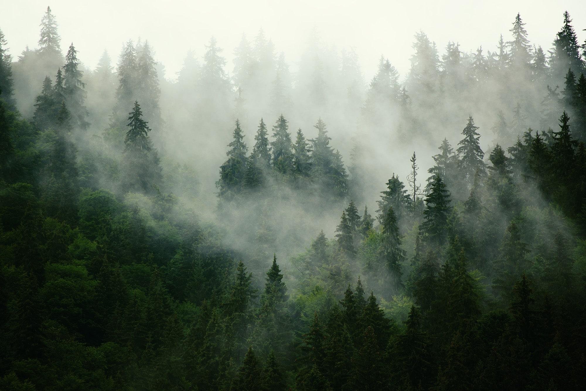 scierie Groupe SIAT - forêts
